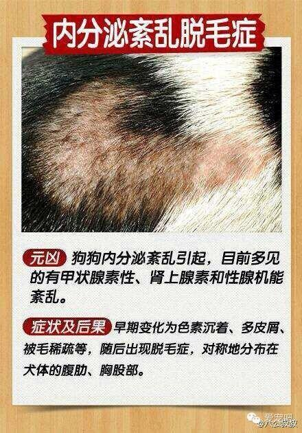 犬类皮肤病分析示意图